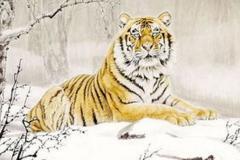 属虎的幸运色是什么颜色 属虎人2019的幸运颜色