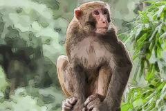 猴宝宝什么时辰出生最好 属猴什么时间出生最好命
