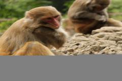 2014马年属猴婚姻VS桃花