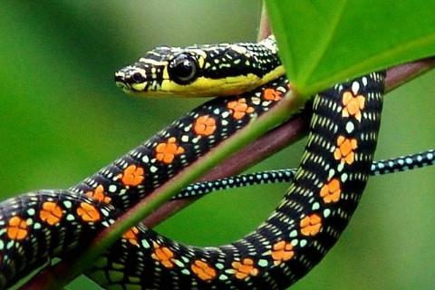 属蛇2021年运势及运程 属蛇的人2021年全年每月运势测算