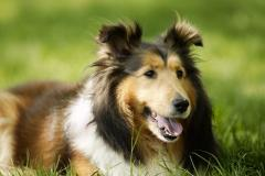 属狗2021年运势及运程 属狗的人2021年全年每月运势测算