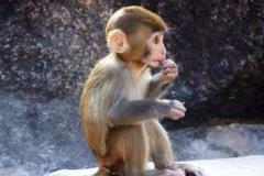 1968年属猴的人2021年运势运程男命女命 今年佩戴什么吉祥物好