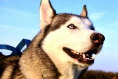 属狗的人2021年犯太岁吗,属狗刑太岁2021化解方法