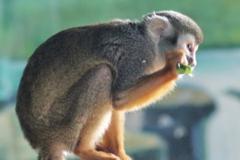 1992年属猴的人2021年运势运程男命女命 今年佩戴什么吉祥物好