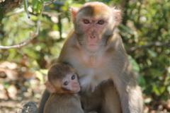 1956年属猴的人2021年运势运程男命女命 今年佩戴什么吉祥物好