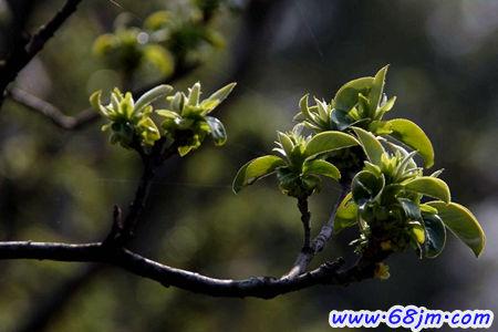 梦见树发芽、树木发芽是什么意思?-