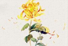 生肖龙在1988年重阳节出生命硬吗,重阳节喝雄黄酒吗?