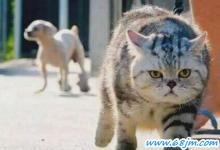 梦见猫吓着孩子