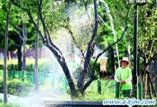 梦见浇树、给大树浇水