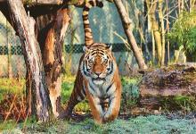 2022年属虎的贵人属相是什么?属虎几点出生最好命?