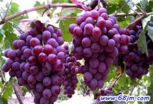 梦见很多葡萄