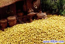 梦见一堆黄豆