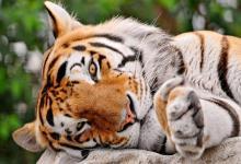 2010年十二月份出生的虎宝宝怎么样?充满信心吗?