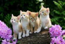 关于招财猫的由来和来历,日本招财猫有什么传说?