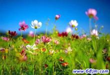 梦见草地鲜花