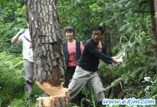 梦见砍树或伐树