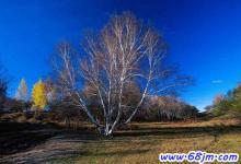 梦见树叶掉光
