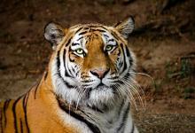 属虎的人考公务员的贵人属相是什么?属虎的开运吉祥物?